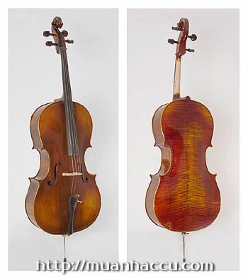 Scott Cao Cello STC017